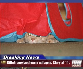 Breaking News - Kitteh survives house collapse. Story at 11.