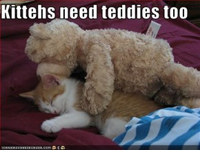 Kittehs need teddies too
