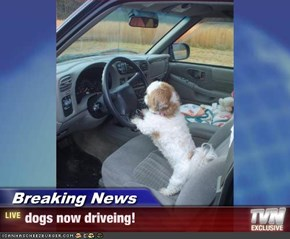 Breaking News - dogs now driveing!