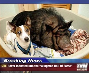 "Breaking News - Rover inducted into the ""Wingman Hall Of Fame"""