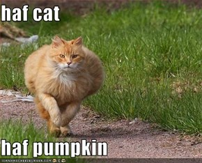 haf cat  haf pumpkin