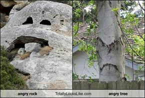 angry rock Totally Looks Like angry tree