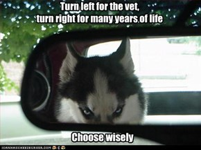 Turn left for the vet,  turn right for many years of life
