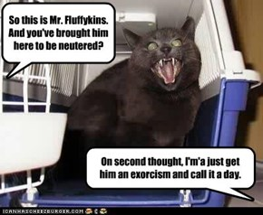 So this is Mr. Fluffykins. And you've brought him here to be neutered?