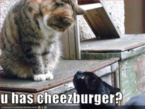 u has cheezburger?