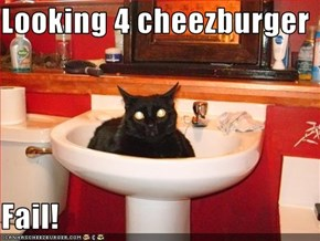 Looking 4 cheezburger   Fail!