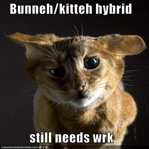 Bunneh/kitteh hybrid  still needs wrk