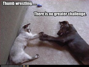 Thumb wrestling......                                            There is no greater challenge.