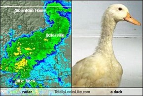 radar Totally Looks Like a duck