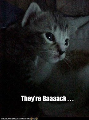 They're Baaaack . . .