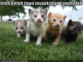 itteh bitteh lawn inspekshun committeh