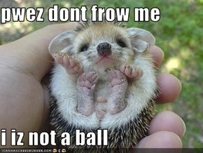pwez dont frow me  i iz not a ball