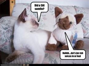 Did u SAI sumfin?