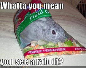 Whatta you mean  you see a rabbit?