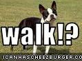 walk!?