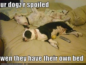 ur dogz r spoiled  wen they have their own bed