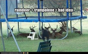 raindeer  + trampolene = bad idea