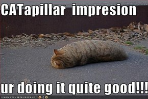 CATapillar  impresion  ur doing it quite good!!!