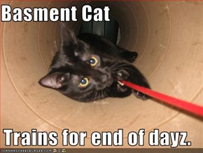 Basment Cat  Trains for end of dayz.