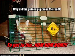 Why did the guinea pig cross the road?