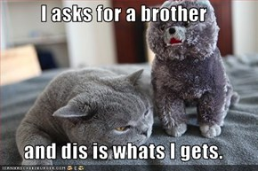 I asks for a brother  and dis is whats I gets.