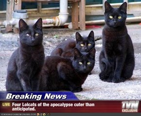 Breaking News - Four Lolcats of the apocalypse cuter than anticipated.