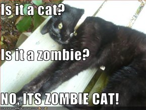 Is it a cat? Is it a zombie? NO, ITS ZOMBIE CAT!