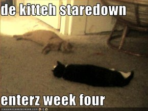 de kitteh staredown  enterz week four