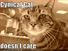 Cynical Cat  doesn't care