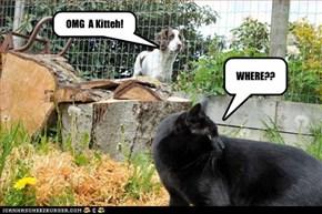 OMG  A Kitteh!