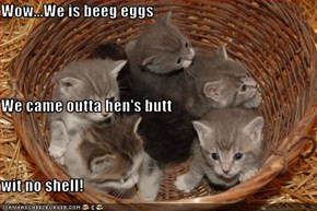Wow...We is beeg eggs We came outta hen's butt wit no shell!