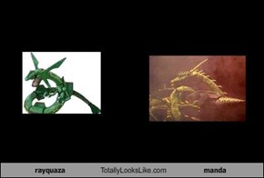 rayquaza Totally Looks Like manda