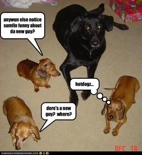hotdogz...