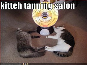 kitteh tanning salon