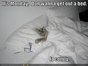 It's Monday.  Don wanna get out a bed.                                                  Iz comfy.