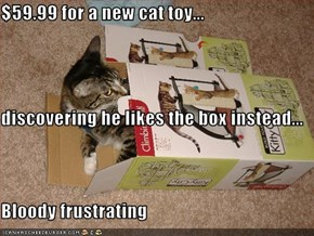 $59.99 for a new cat toy... discovering he likes the box instead... Bloody frustrating