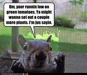Um, your runnin low on green tomatoes. Ya might wanna set out a couple more plants. I'm jus sayin.