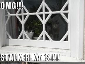 OMG!!!  STALKER KATS!!!!