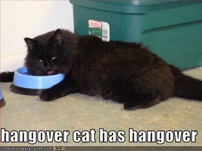 hangover cat has hangover