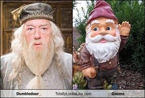 Dumbledoor Totally Looks Like Gnome