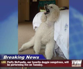 Breaking News - Fluffy McPoodle, our favorite doggie songstress, will be performing live on Tuesday.