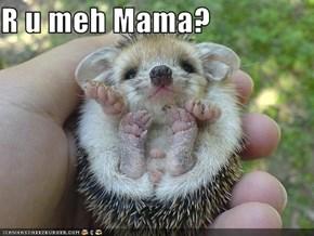 R u meh Mama?