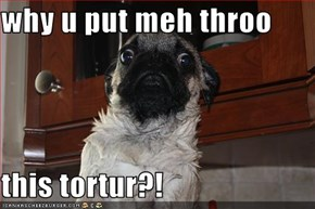 why u put meh throo  this tortur?!