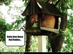 Gotta luve those Red Robins...