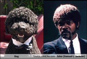 Dog Totally Looks Like Jules (Samuel L. Jackson)