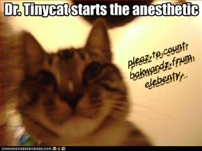 Dr. Tinycat starts the anesthetic