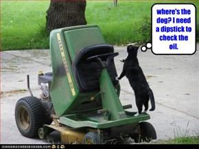 where's the dog? I need a dipstick to check the oil.