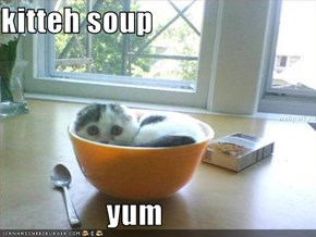 kitteh soup                    yum