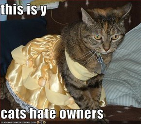 this is y   cats hate owners