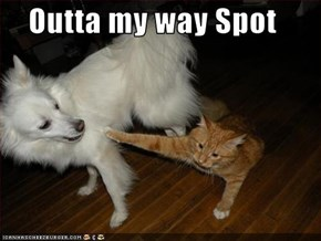 Outta my way Spot